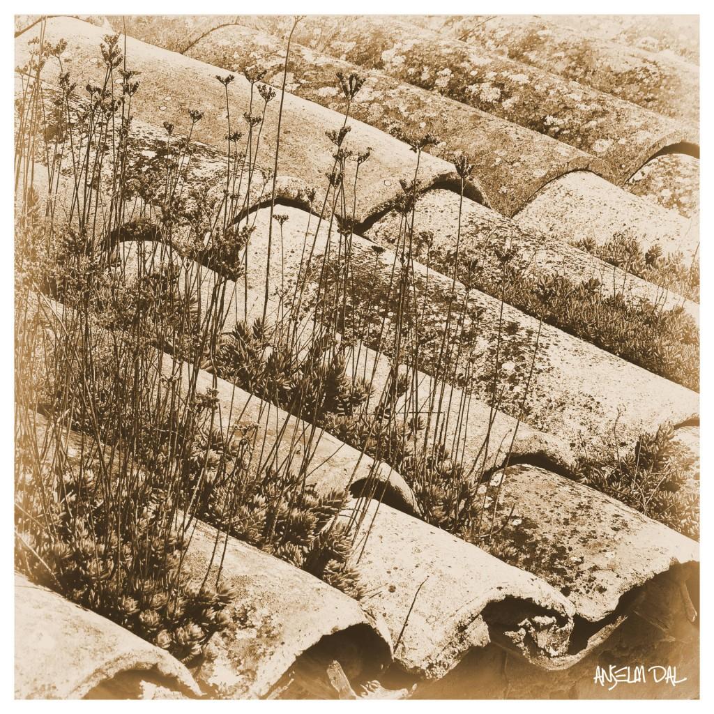 Ein Ökodach aus dem 19. Jahrhundert